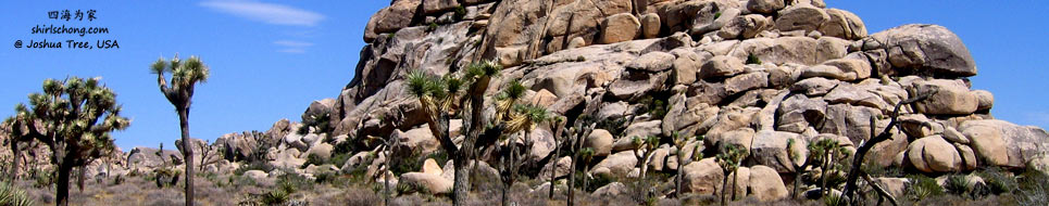 joshua_tree_blog.jpg