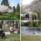 多伦多周末好去处和旅游景点:High Park 和 Bloor West
